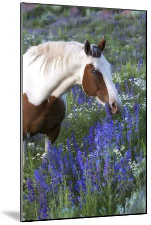 Portrait of a Horse in a Field of Purple Wildflowers-Robbie George-Mounted Photographic Print