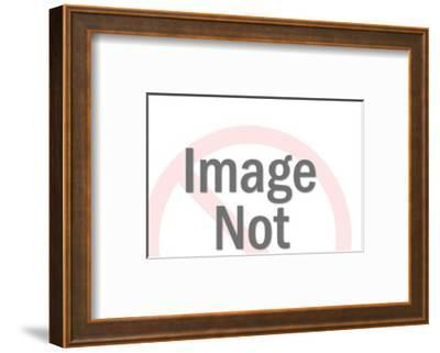 Swimming Mallard Duck-Pop Ink - CSA Images-Framed Art Print