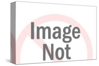 Hummingbird-Pop Ink - CSA Images-Stretched Canvas Print