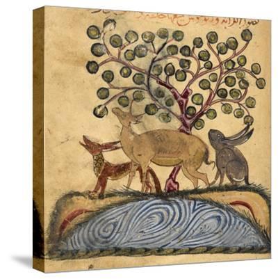 Deer-type, Rabbit and Fox, Standing Over Water-Aristotle ibn Bakhtishu-Stretched Canvas Print