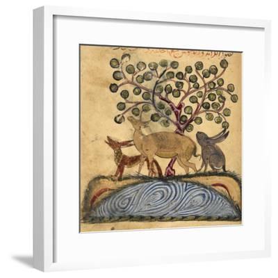 Deer-type, Rabbit and Fox, Standing Over Water-Aristotle ibn Bakhtishu-Framed Giclee Print