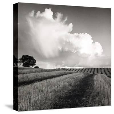 Large White Cloud Near Bilsington, Kent, 1981.-Fay Godwin-Stretched Canvas Print