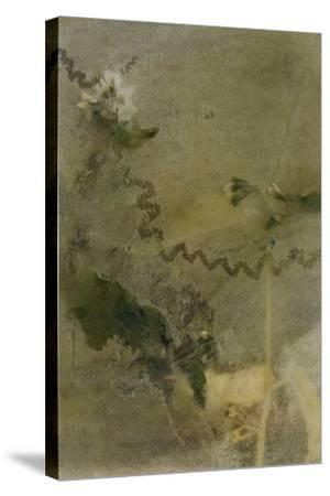 Blurred Image Of Flowers-Fay Godwin-Stretched Canvas Print