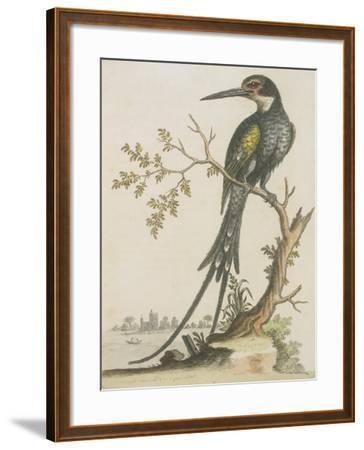 Kingfisher--Framed Giclee Print