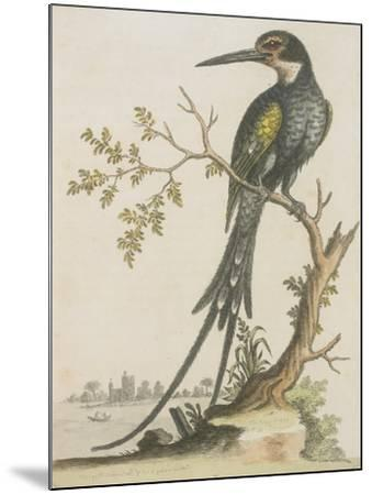 Kingfisher--Mounted Giclee Print