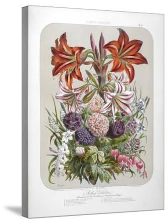 A Bouquet Of Flowers Including Lilies-Elisa Champin-Stretched Canvas Print