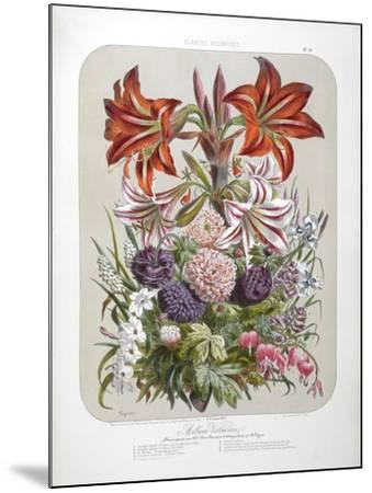 A Bouquet Of Flowers Including Lilies-Elisa Champin-Mounted Giclee Print