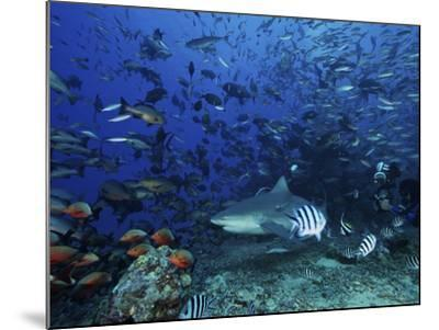 An Underwater Photographer Films a Large Bull Shark Surrounded by Hundreds of Reef Fish, Fiji-Stocktrek Images-Mounted Photographic Print