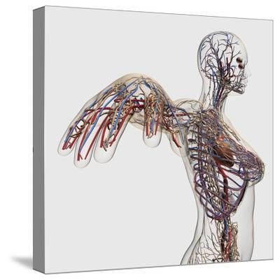 Medical Illustration of Arteries, Veins And Lymphatic System in Female Chest Area-Stocktrek Images-Stretched Canvas Print
