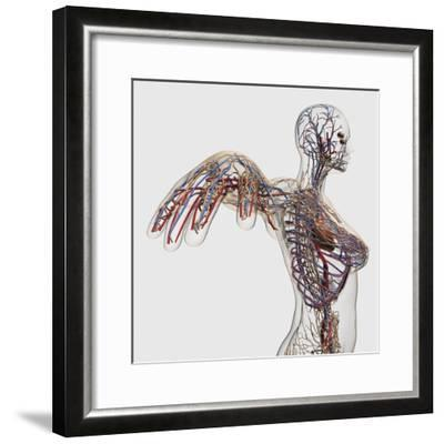 Medical Illustration of Arteries, Veins And Lymphatic System in Female Chest Area-Stocktrek Images-Framed Photographic Print