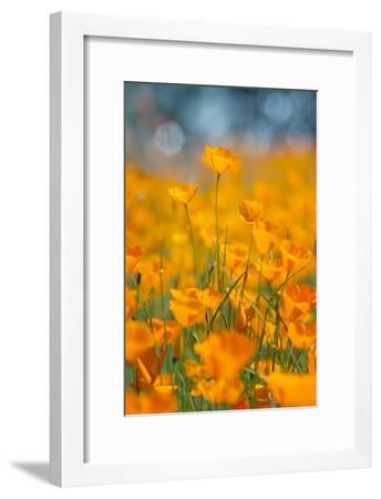 Riverside Poppies-Vincent James-Framed Photographic Print