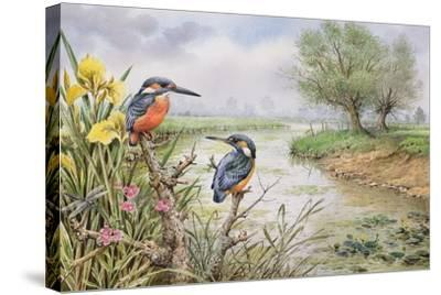 Kingfishers on the Riverbank-Carl Donner-Stretched Canvas Print