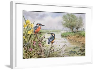 Kingfishers on the Riverbank-Carl Donner-Framed Giclee Print