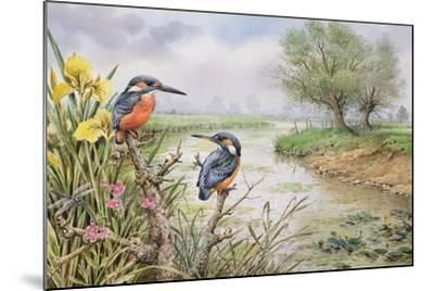 Kingfishers on the Riverbank-Carl Donner-Mounted Giclee Print