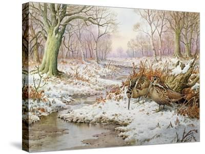 Woodcock-Carl Donner-Stretched Canvas Print