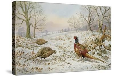 Pheasant and Partridges in a Snowy Landscape-Carl Donner-Stretched Canvas Print