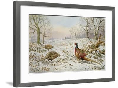 Pheasant and Partridges in a Snowy Landscape-Carl Donner-Framed Giclee Print