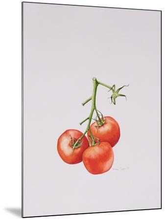 Three Tomatoes on the Vine, 1997-Alison Cooper-Mounted Giclee Print