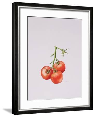Three Tomatoes on the Vine, 1997-Alison Cooper-Framed Giclee Print