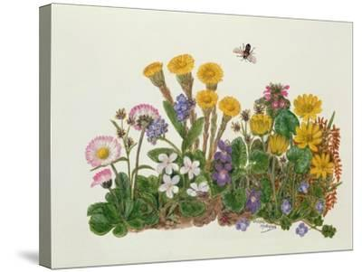 Purple and White Violets, Daisy, Celandine and Forget-Me-Not-Ursula Hodgson-Stretched Canvas Print