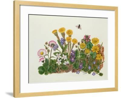 Purple and White Violets, Daisy, Celandine and Forget-Me-Not-Ursula Hodgson-Framed Giclee Print