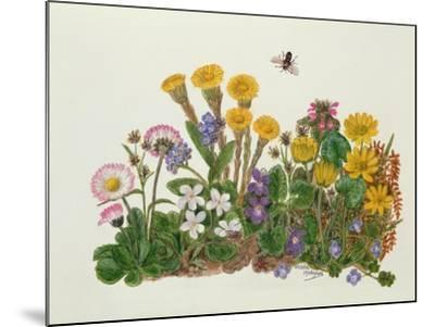 Purple and White Violets, Daisy, Celandine and Forget-Me-Not-Ursula Hodgson-Mounted Giclee Print