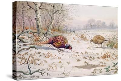 Pheasant and Partridge Eating-Carl Donner-Stretched Canvas Print