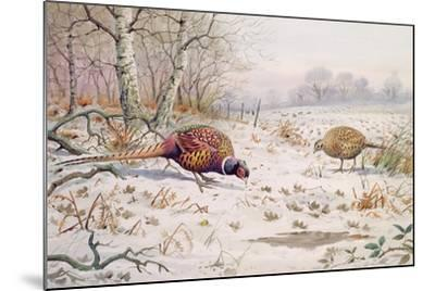 Pheasant and Partridge Eating-Carl Donner-Mounted Giclee Print