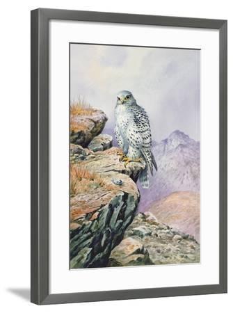 Gyrfalcon-Carl Donner-Framed Giclee Print