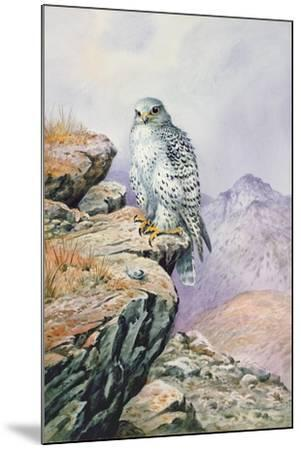 Gyrfalcon-Carl Donner-Mounted Giclee Print