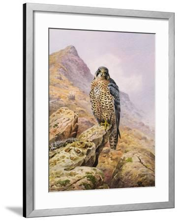 Peregrine Falcon-Carl Donner-Framed Giclee Print