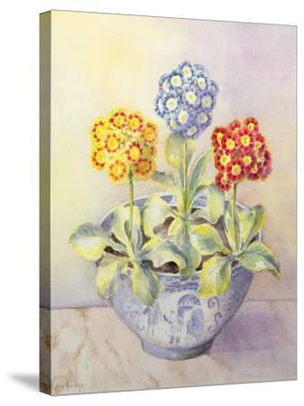 Auricula in a Chinese Pot-Karen Armitage-Stretched Canvas Print