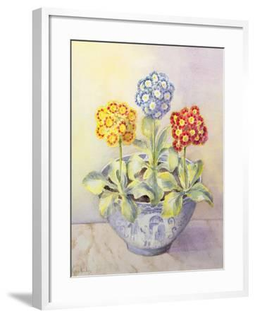 Auricula in a Chinese Pot-Karen Armitage-Framed Giclee Print