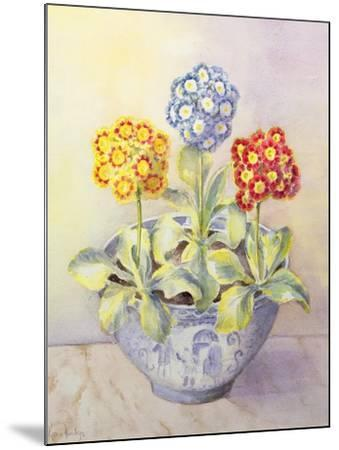 Auricula in a Chinese Pot-Karen Armitage-Mounted Giclee Print