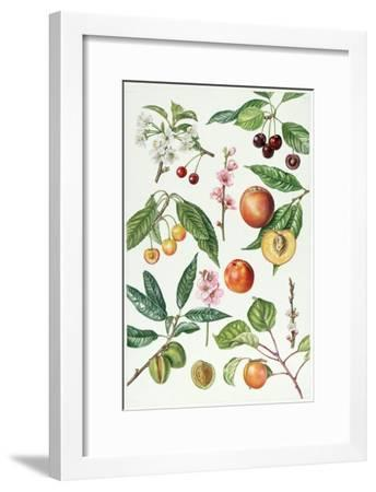 Cherries and Other Fruit-Bearing Trees-Elizabeth Rice-Framed Giclee Print