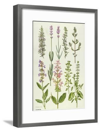 Rosemary and Other Herbs-Elizabeth Rice-Framed Giclee Print
