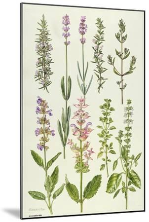 Rosemary and Other Herbs-Elizabeth Rice-Mounted Giclee Print