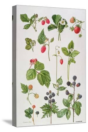 Strawberries, Raspberries and Other Edible Berries-Elizabeth Rice-Stretched Canvas Print