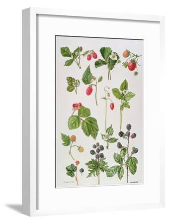Strawberries, Raspberries and Other Edible Berries-Elizabeth Rice-Framed Premium Giclee Print