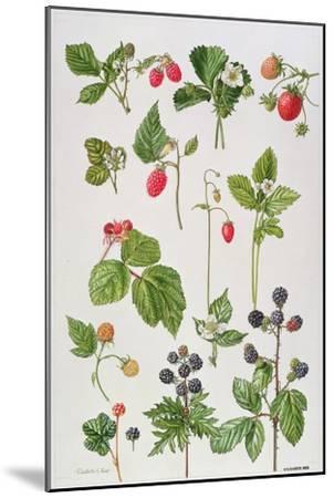 Strawberries, Raspberries and Other Edible Berries-Elizabeth Rice-Mounted Premium Giclee Print