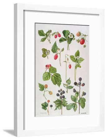 Strawberries, Raspberries and Other Edible Berries-Elizabeth Rice-Framed Giclee Print