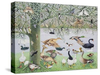 The Odd Duck-Pat Scott-Stretched Canvas Print