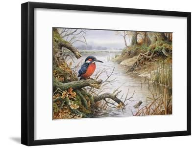 Kingfisher-Carl Donner-Framed Giclee Print