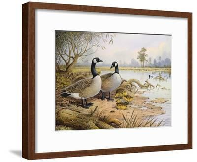 Geese: Canada-Carl Donner-Framed Giclee Print