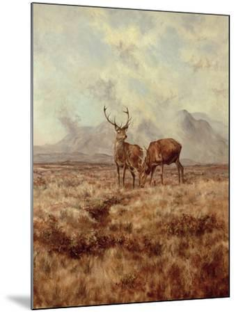 Red Stags, Ben Buie, 1982-Tim Scott Bolton-Mounted Giclee Print