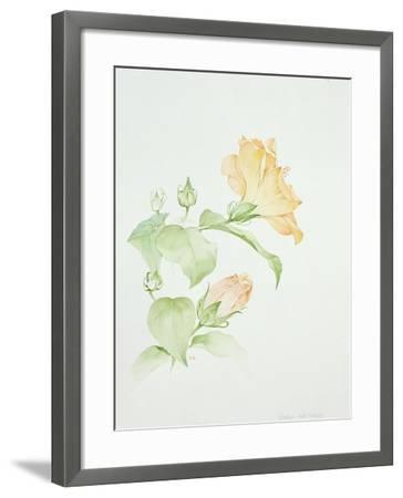 Hibiscus Rosa-Sinensis-Sarah Creswell-Framed Giclee Print
