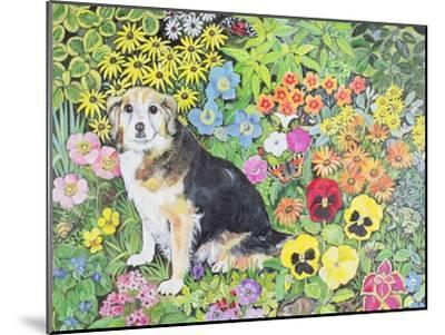 Caylie in the Border-Hilary Jones-Mounted Giclee Print