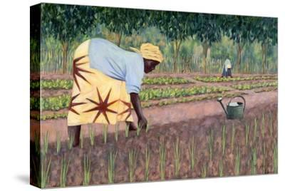 Planting Onions, 2005-Tilly Willis-Stretched Canvas Print