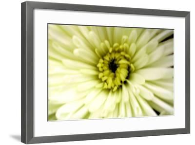 Birthday Flower-Sarah O'Toole-Framed Photographic Print
