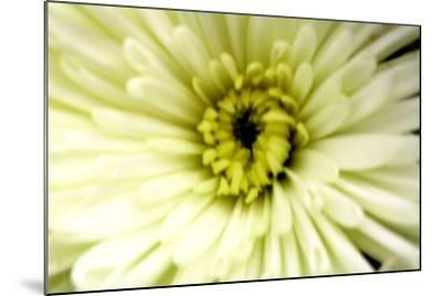 Birthday Flower-Sarah O'Toole-Mounted Photographic Print